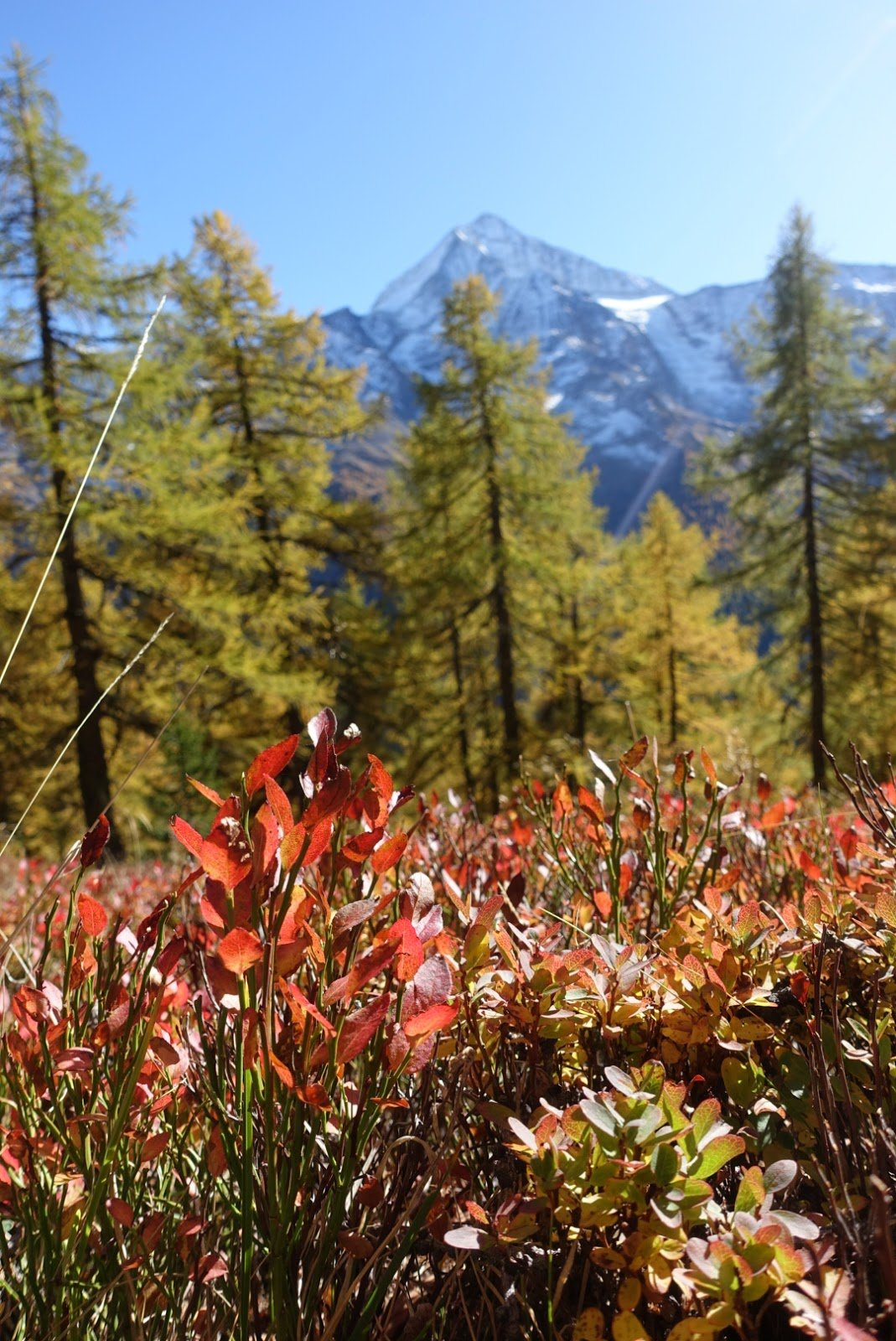 Lötschentaler Höhenweg – Goldener Oktober im Wallis